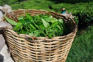 a-basket-full-of-green